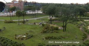 Have You Considered Trying DVC for Your Disney Trip?